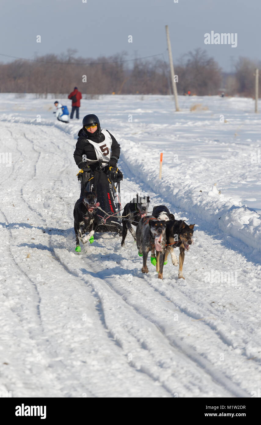 L'Epiphanie, Canada 1/28/2018 . A musher and her team of dogs race in the International Dog sled Race of Lanaudiere, - Stock Image