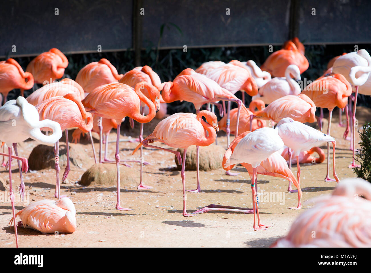 Animals in a zoo. various wild animals photo. 060 - Stock Image