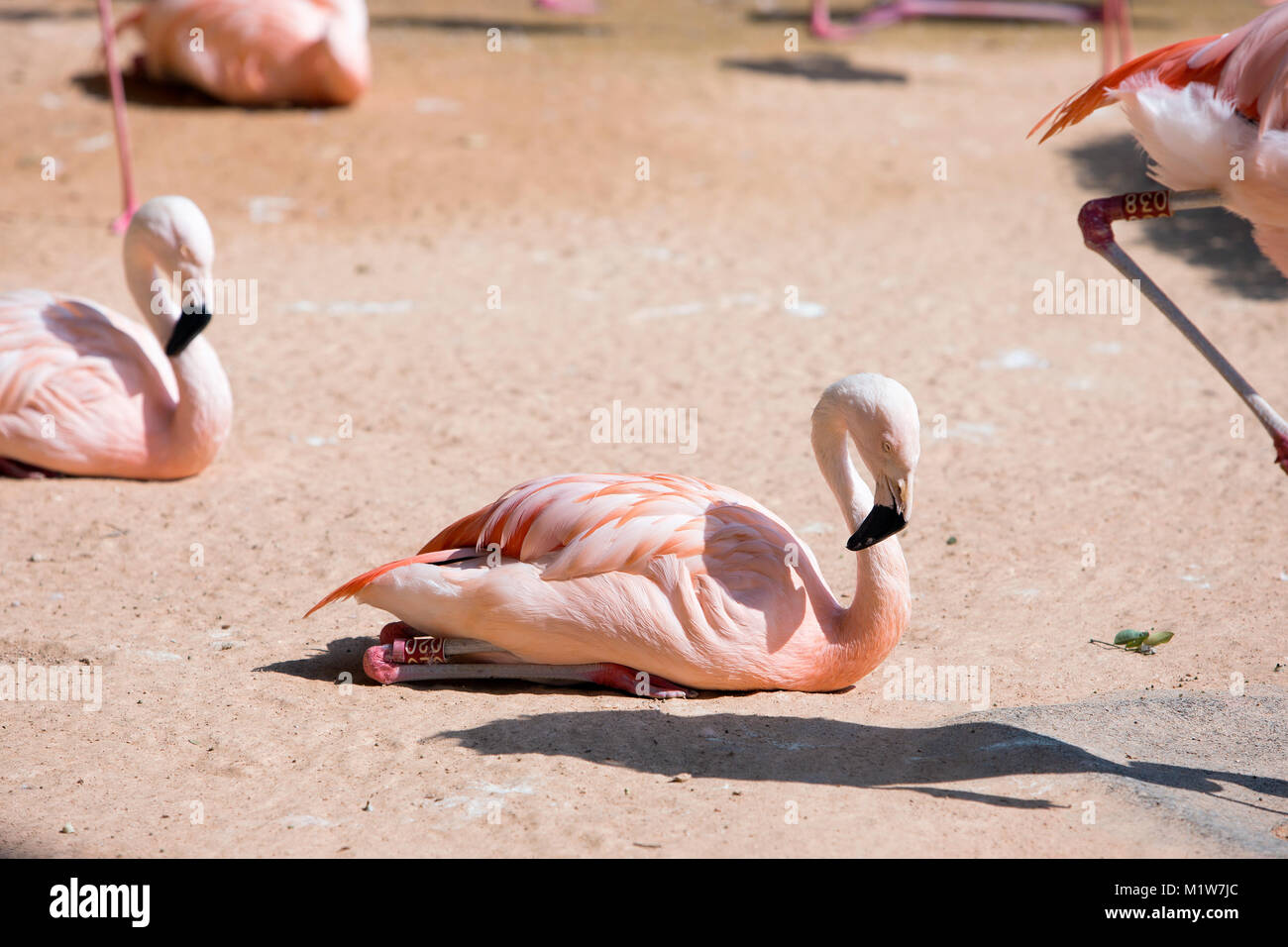 Animals in a zoo. various wild animals photo. 068 - Stock Image