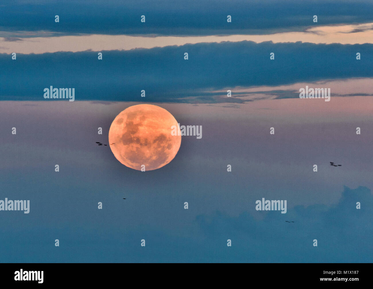 Super Blue Blood Moon rising before the beginning of the eclipse which occurred on 31st January 2018 over Palm Cove, - Stock Image