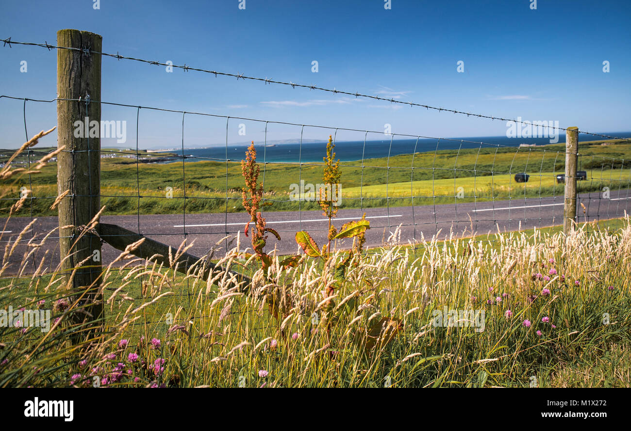 Flowers and Barbed Wire Fence along coastline in Northern Ireland - Stock Image
