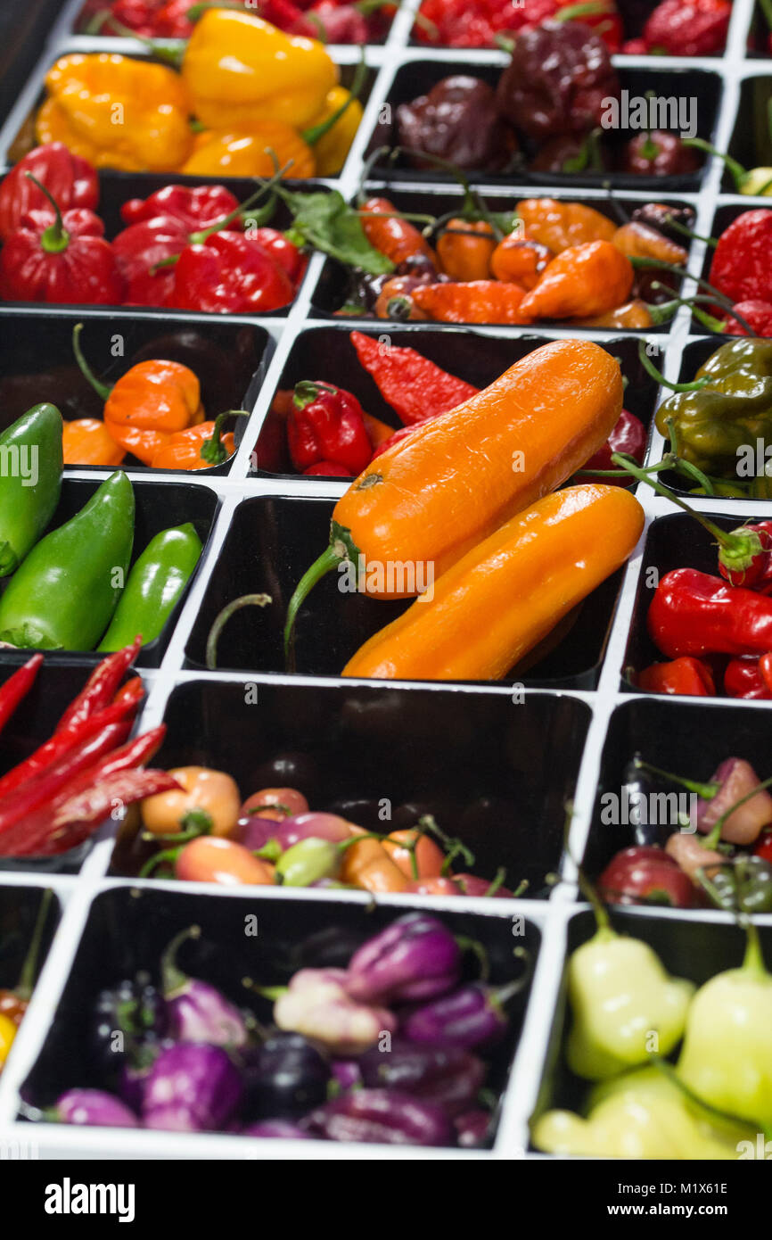 Spicy chili Peppers of various colors, sold at market - Stock Image