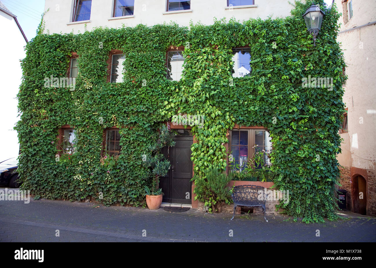 Entrance to herb garden shop, house facade with twiners, Uerzig, Moselle river, Rhineland-Palatinate, Germany, Europe Stock Photo