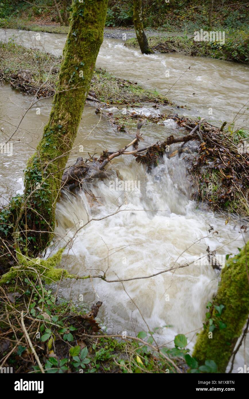 Woody debris forming a natural dam and slowing down the speed of  river flow, River Wyre, Wales, UK. Stock Photo