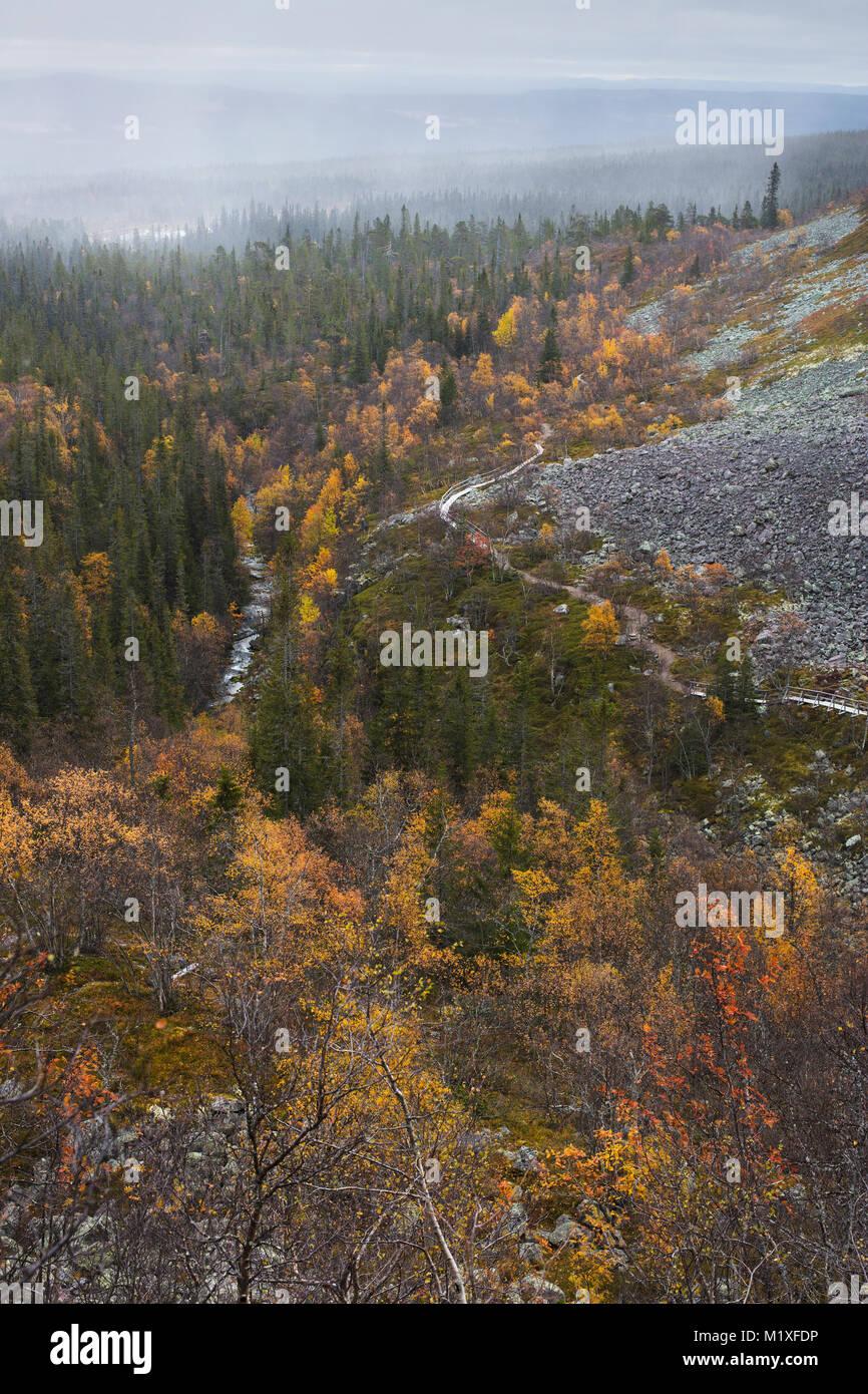 Forest in Dalarna, Sweden - Stock Image