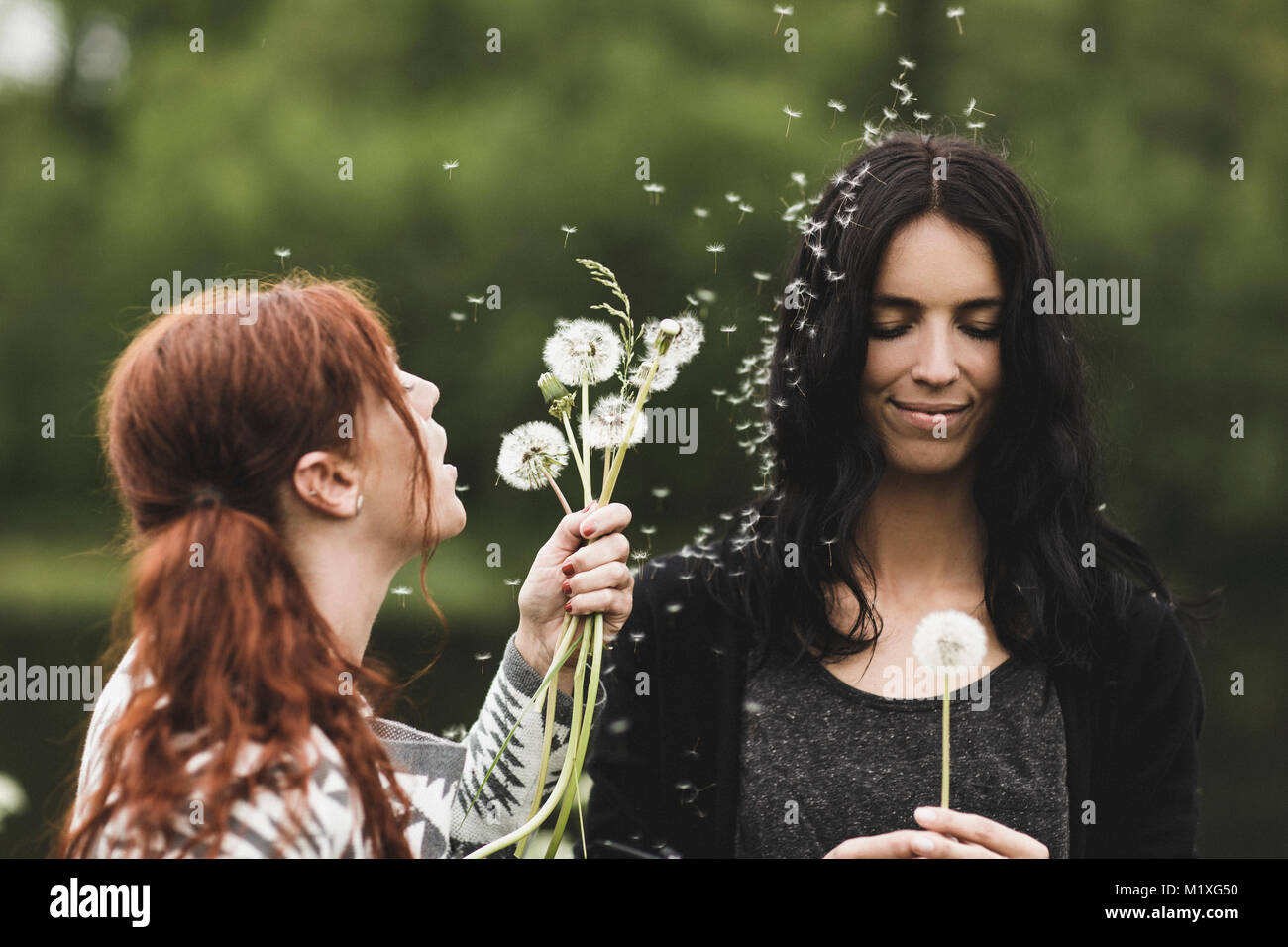 Young woman blowing dandelions at friend in Sweden - Stock Image