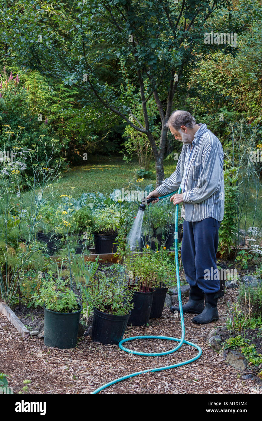A man in his early 60's in casual clothes uses a hose and nozzle to selectively water plants in containers and - Stock Image