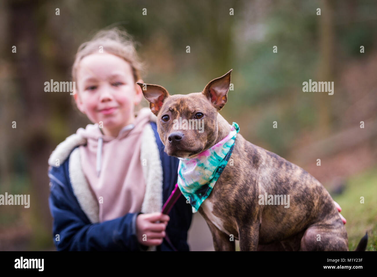 Young girl with her pet staffordshire bull terrier dog in the park smiling - Stock Image