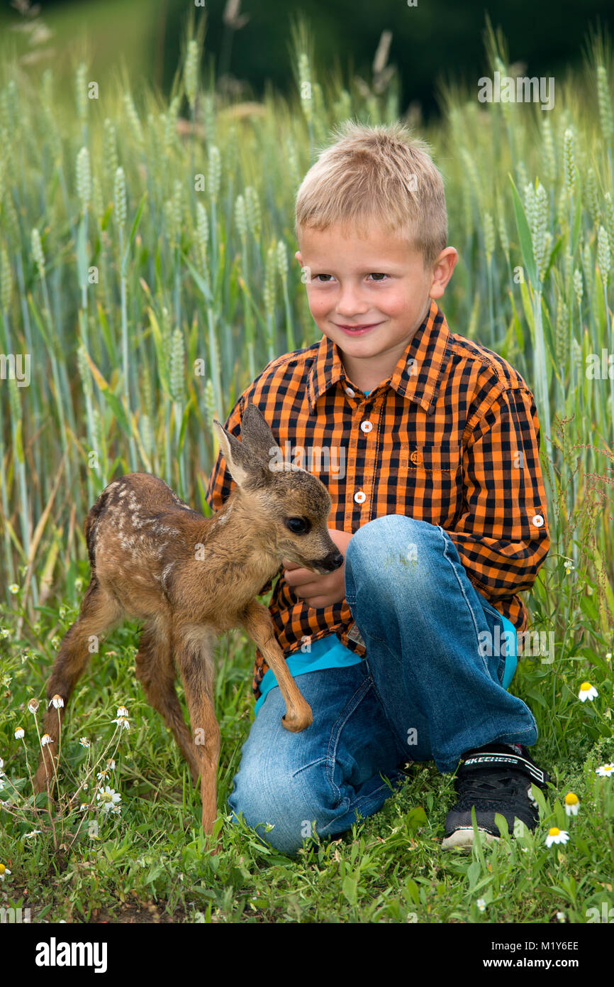 Hand rearing, boy sits with a tame fawn in a meadow, Styria, Austria - Stock Image