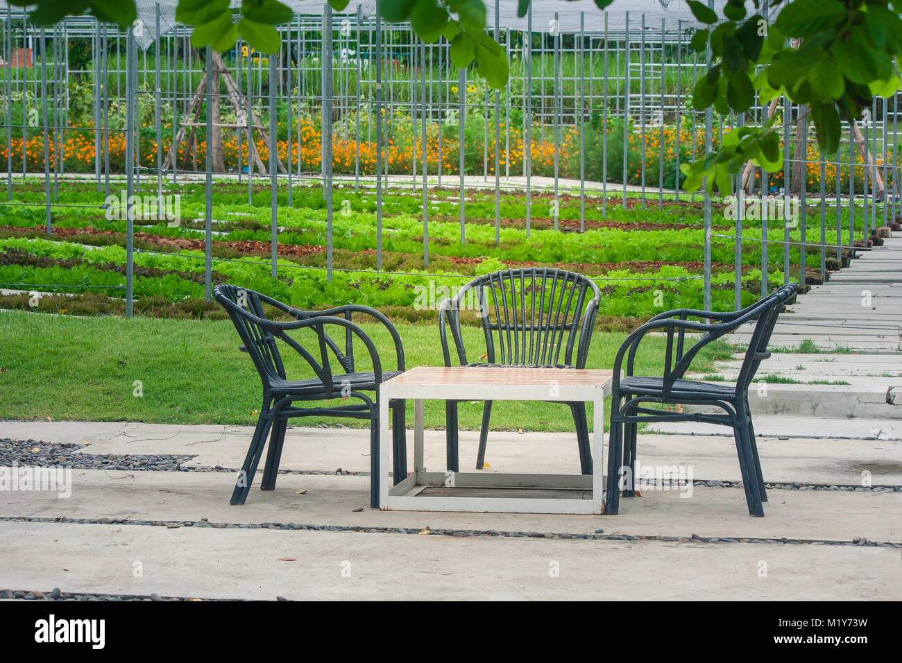 Wonderful Three Black Wooden Chair And One Table Setting On Concrete Floor At Beautiful  Outdoor Garden With Green Natural Background.