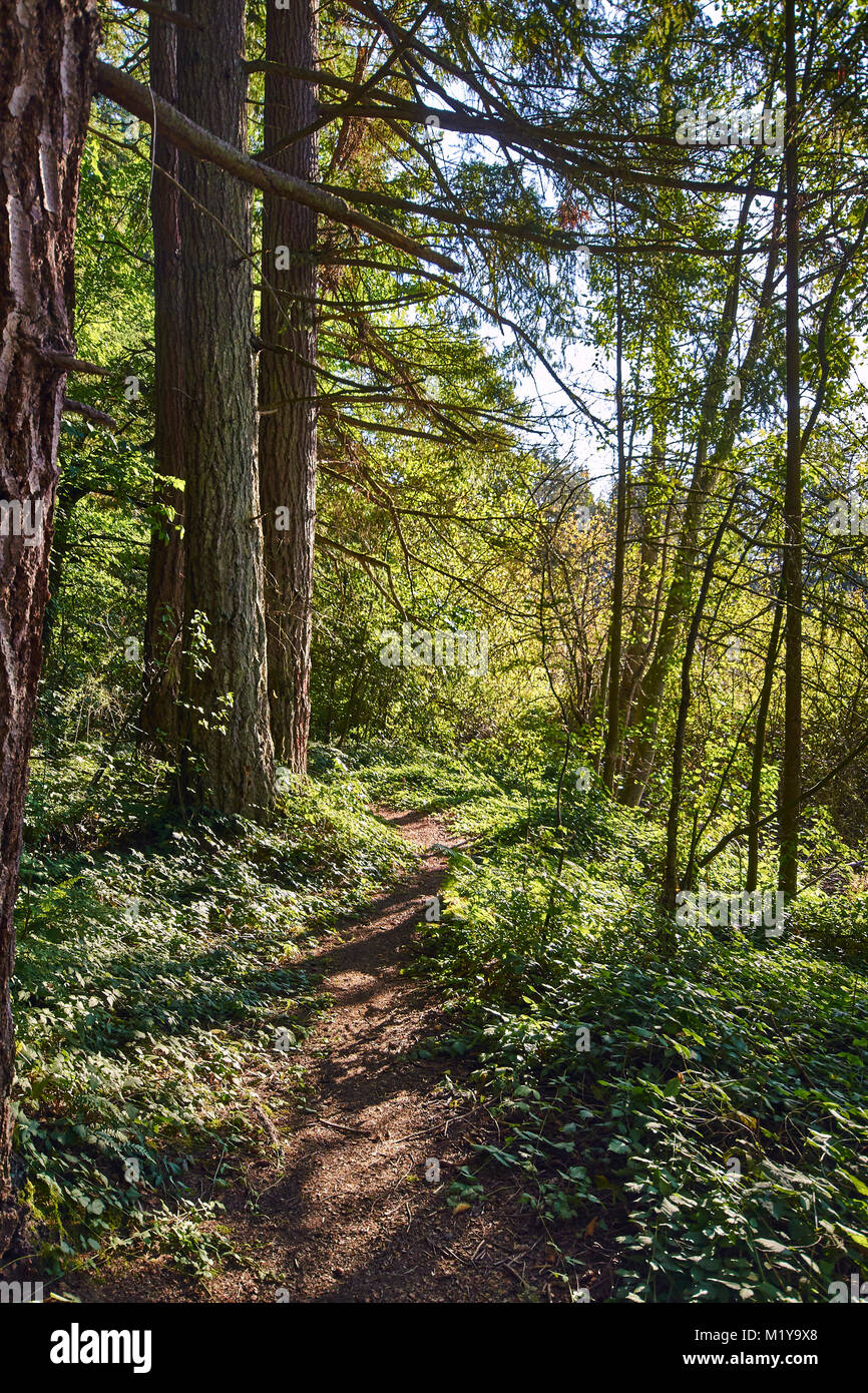 Images of nature from around yellow lake, a small lake in the urban area in issaquah washington state - Stock Image