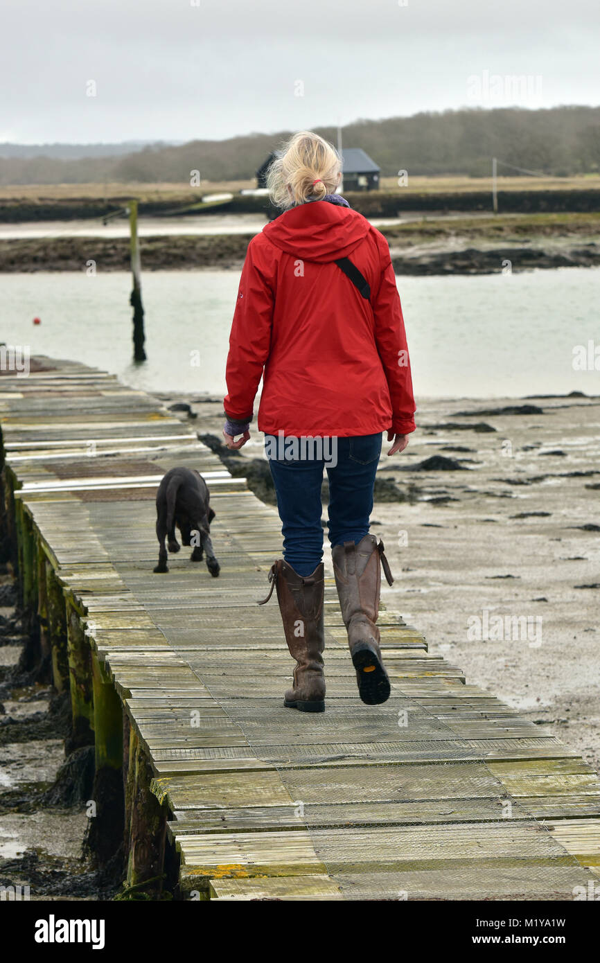 a woman or lady female walking a chocolate Labrador dog along an old rickety jetty made of wood at low tide on the - Stock Image