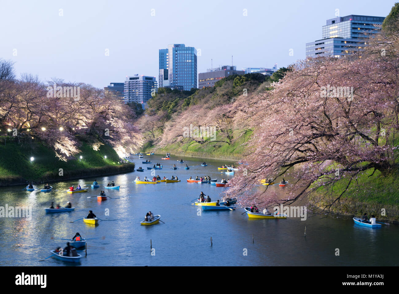 Night view of massive cherry blossoming with Tokyo city as background. Photoed at Chidorigafuchi, Tokyo, Japan. - Stock Image