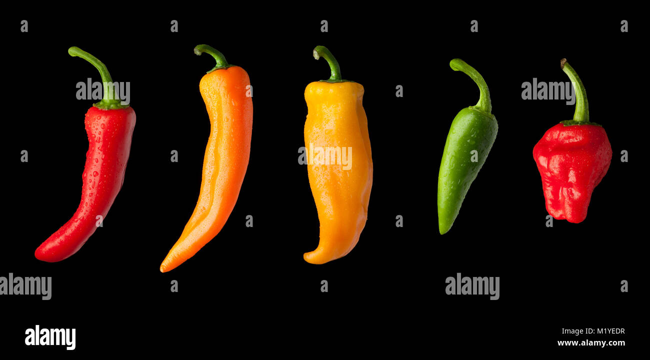 A variety of colourful chilli peppers covered in fresh water droplets cut out in a line on a black background. - Stock Image