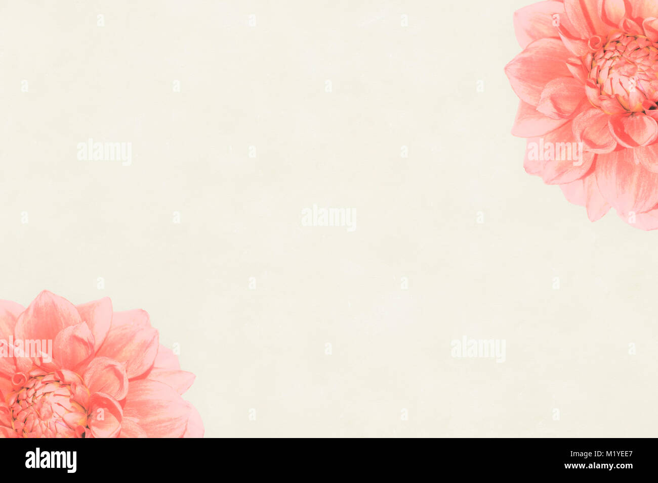 Pastel Pink Solid Background With Red Roses Photo Borders M Yee in addition Les Fig additionally  further Boxwood X further Outdoor Patio Design Ideas. on solid hedge border