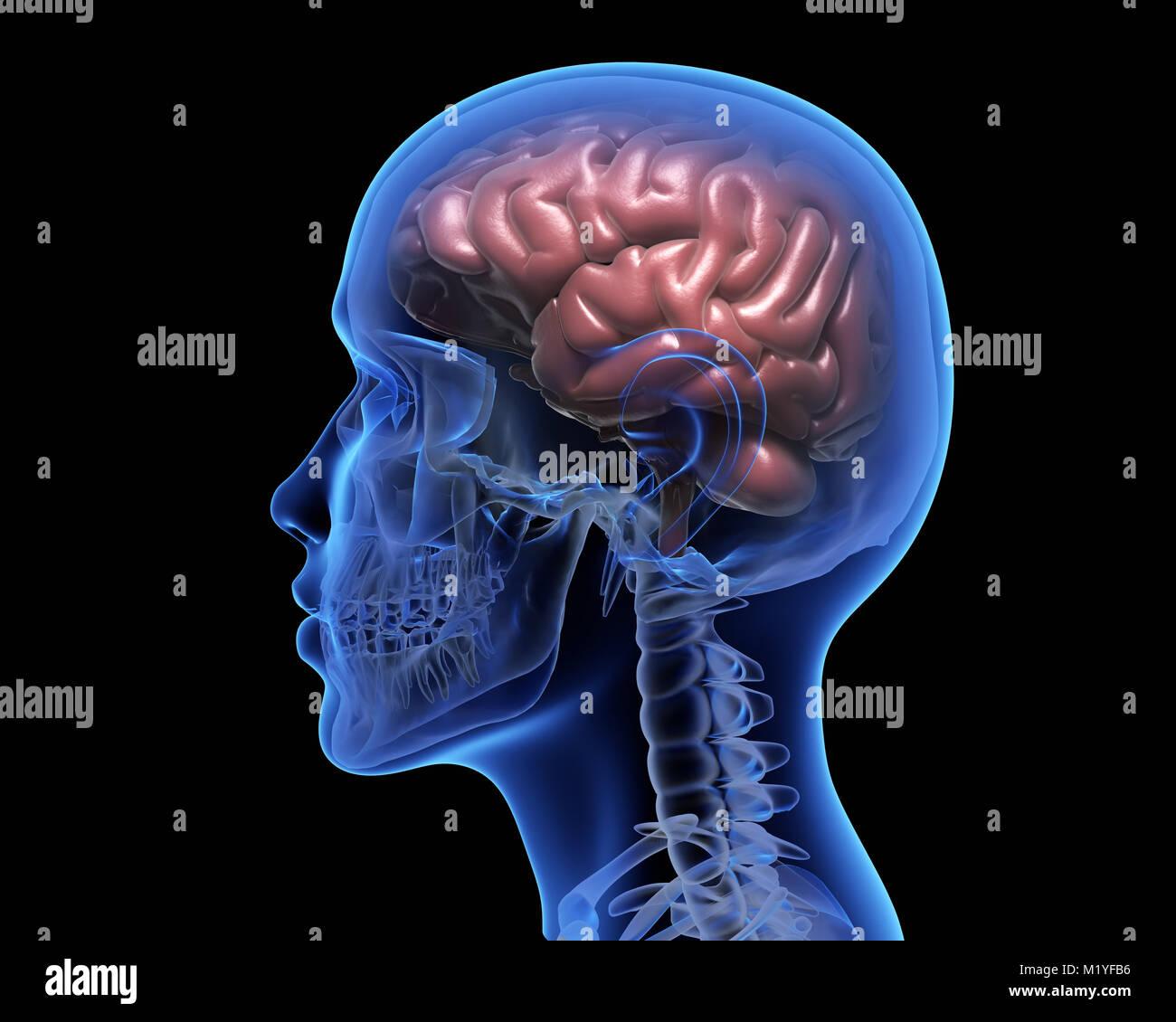 Human brain over black background. 3D illustration - Stock Image