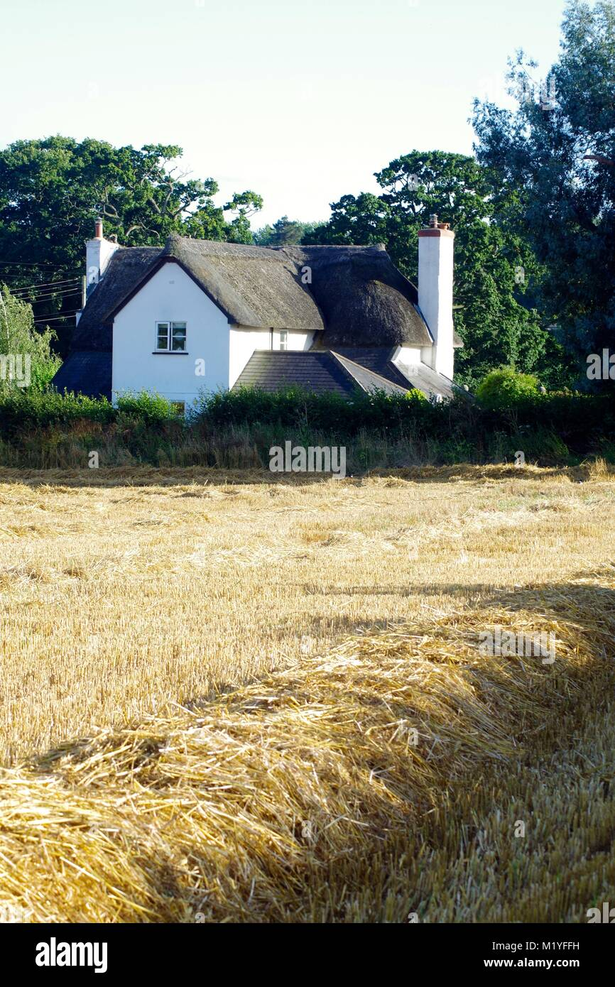 Quaint Thatched Cottage behind a Straw Field at Harvest Time, Late Summer. Poltimor, Exeter, Devon Countryside, - Stock Image