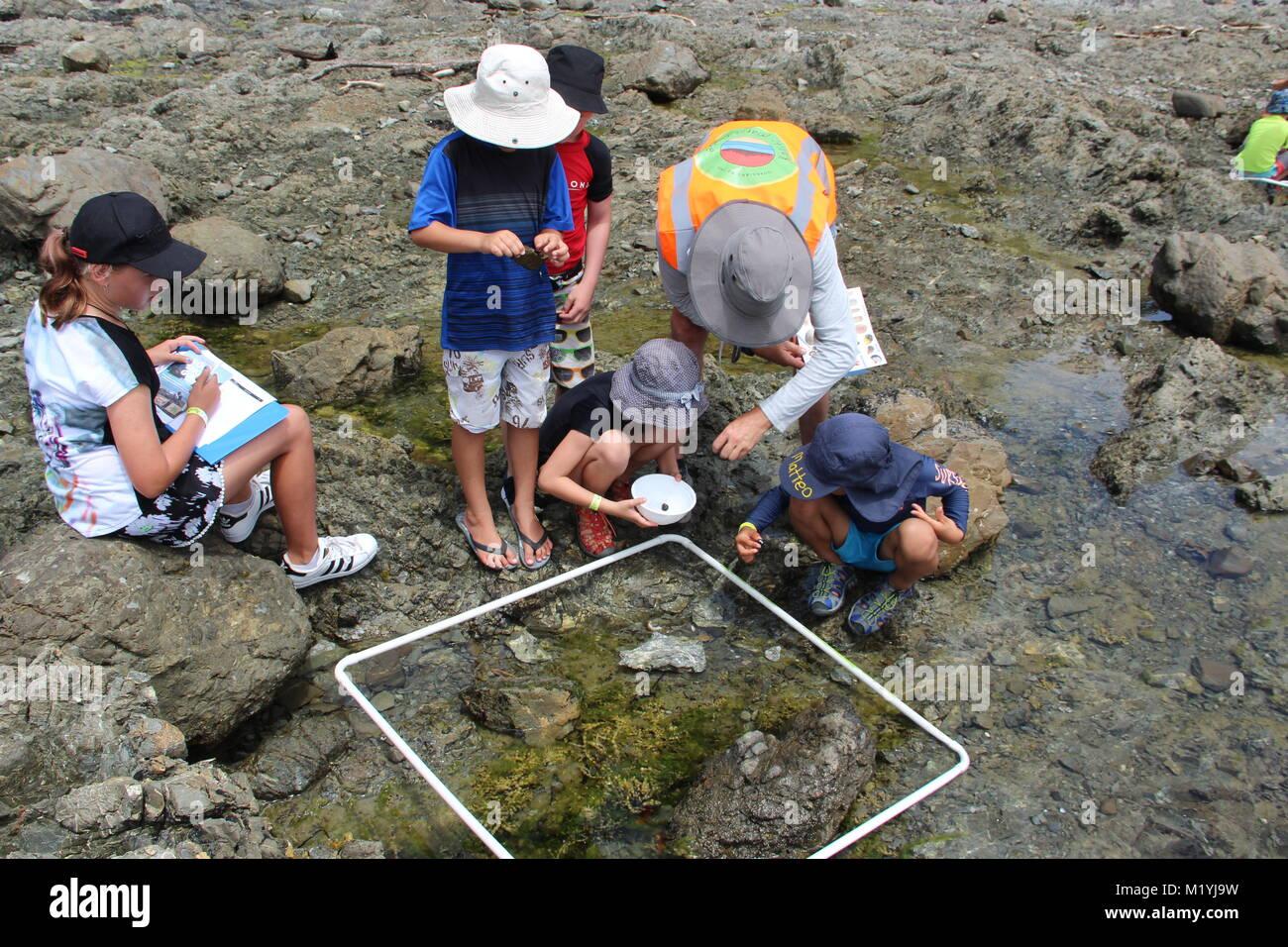 Rocky shore intertidal school study - Stock Image