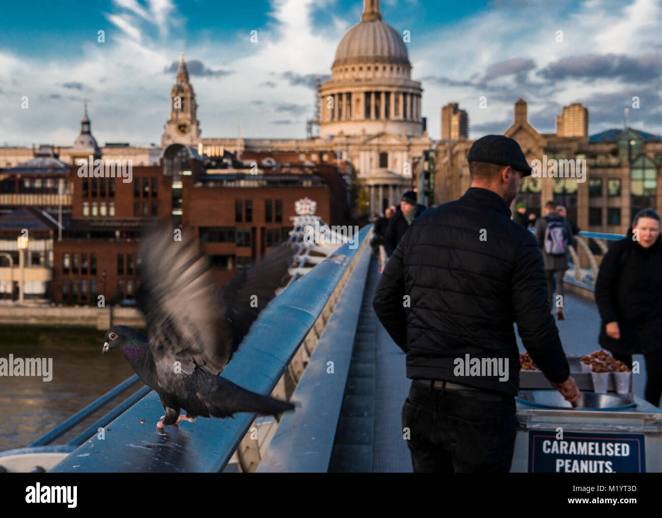 People and pigeon on Millennium Bridge with St Paul's Cathedral in background, London, UK - Stock Image