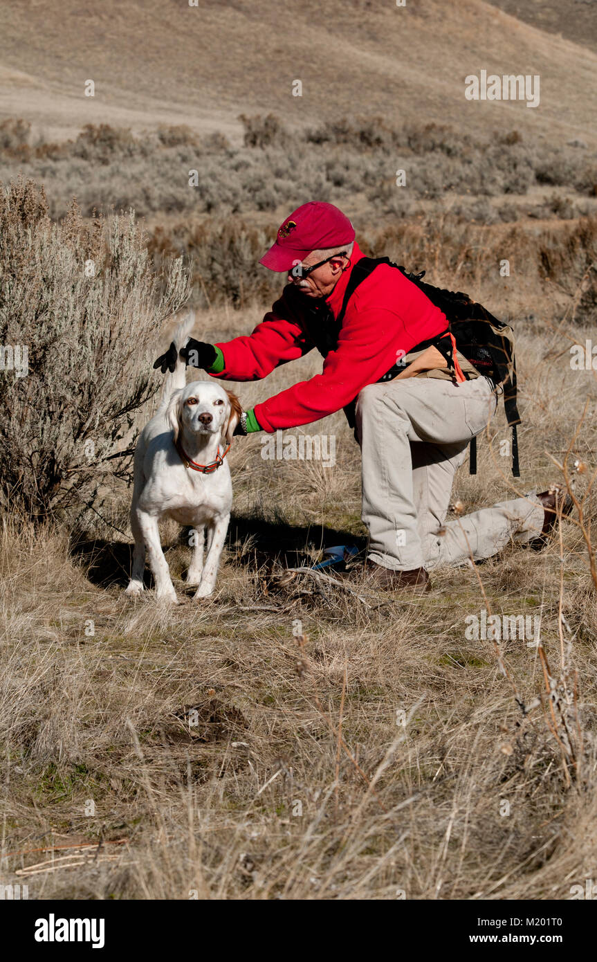 Dog trainer working with English setter - Stock Image