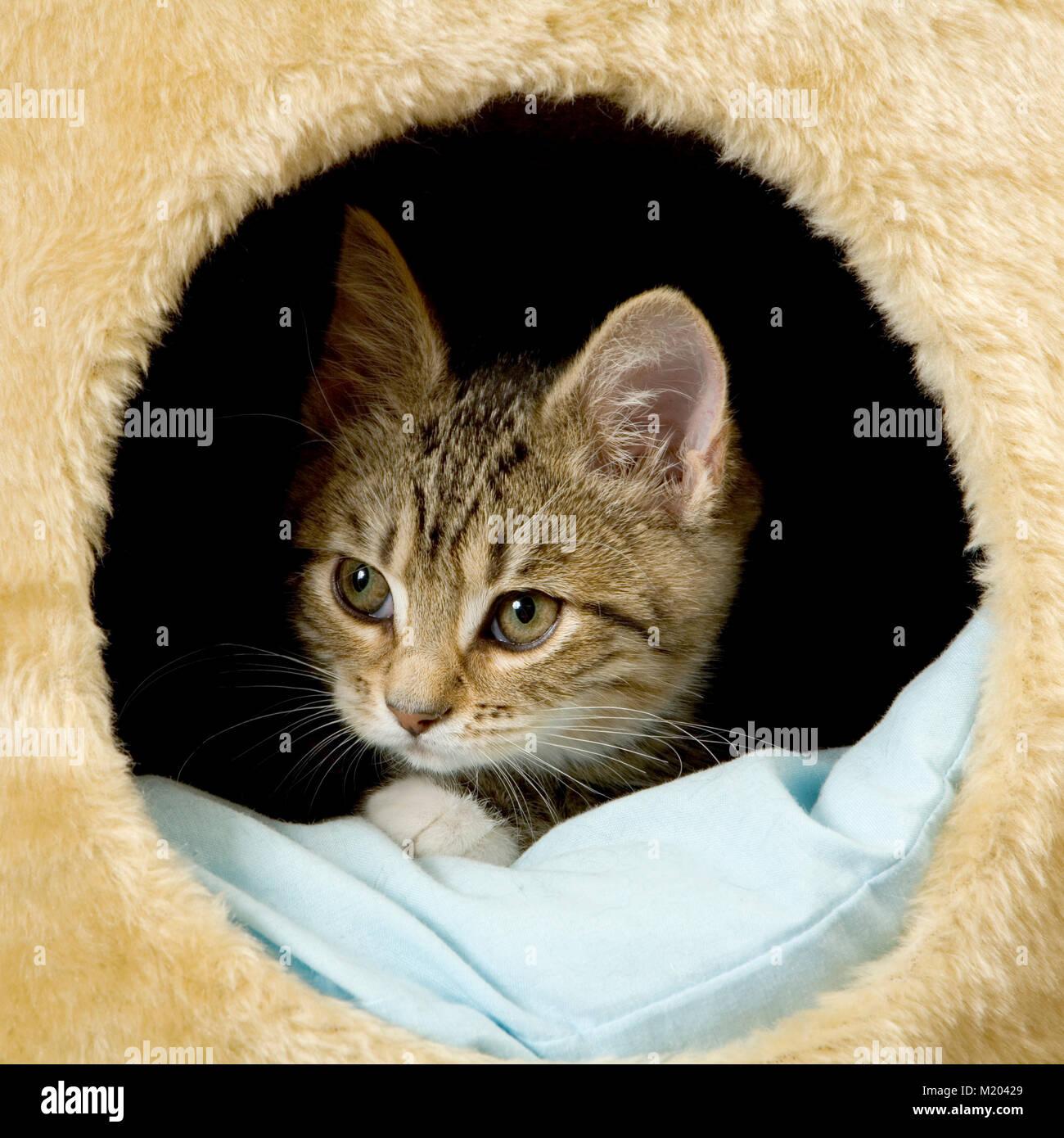 Cautious kitten - Stock Image