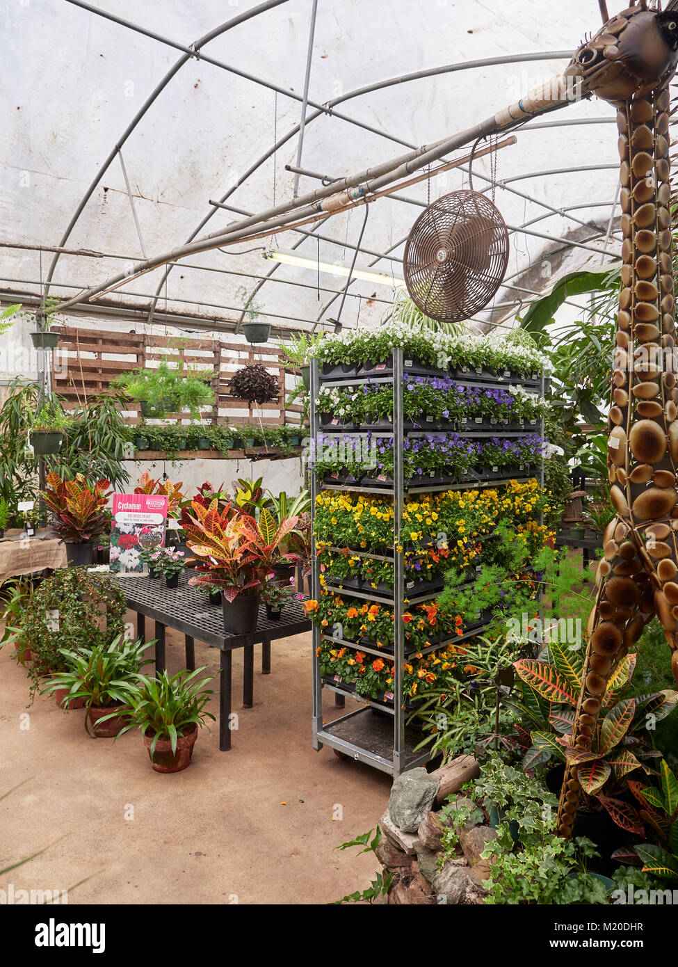 Variety of plants and flowers including pansies, for sale in a retail garden nursery hot house in Auburn Alabama, - Stock Image
