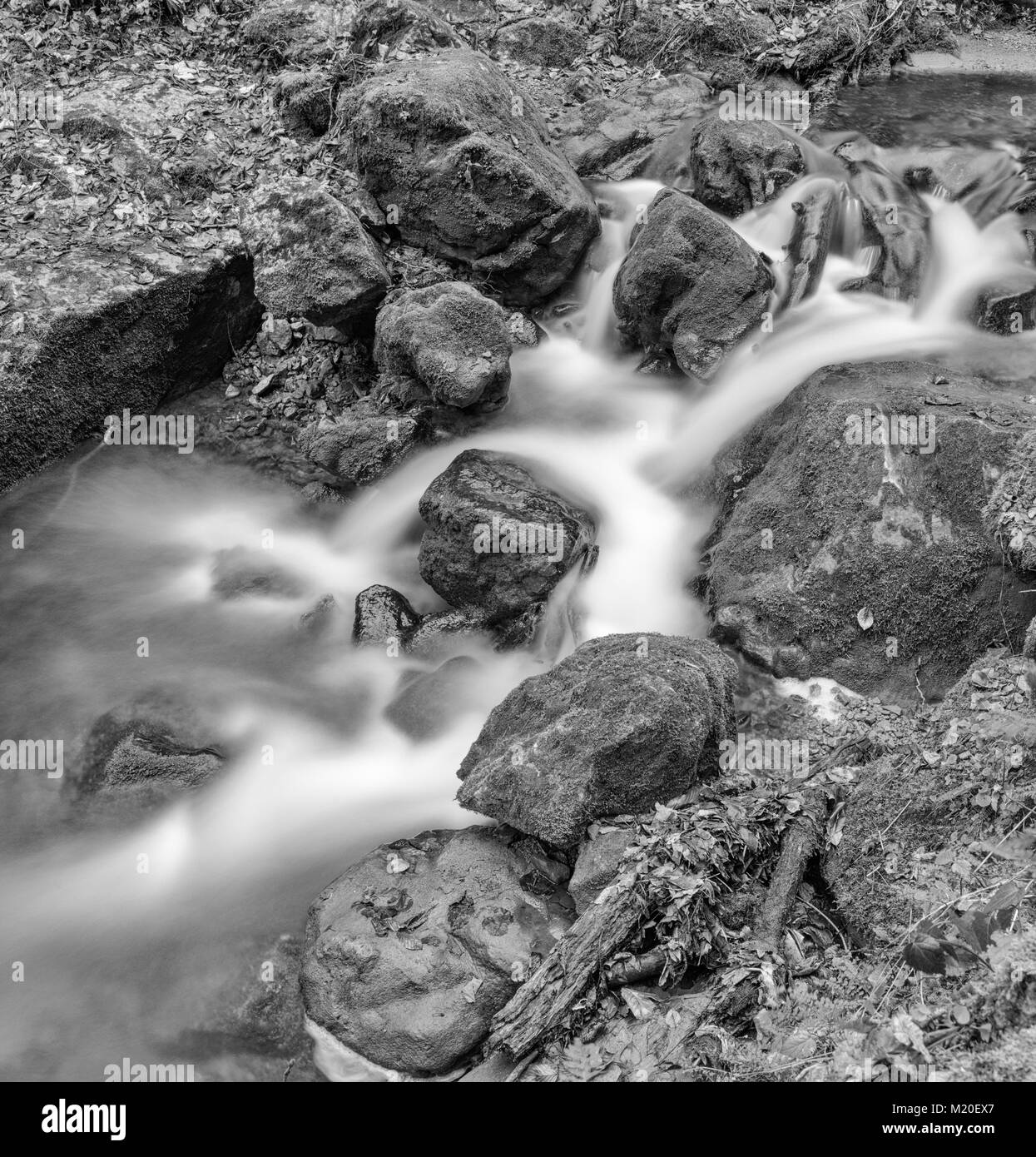 Monochrome black and white outdoor long exposure of a small stream / creek in winter / fall forest with stones,trees,moss,autumnal - Stock Image