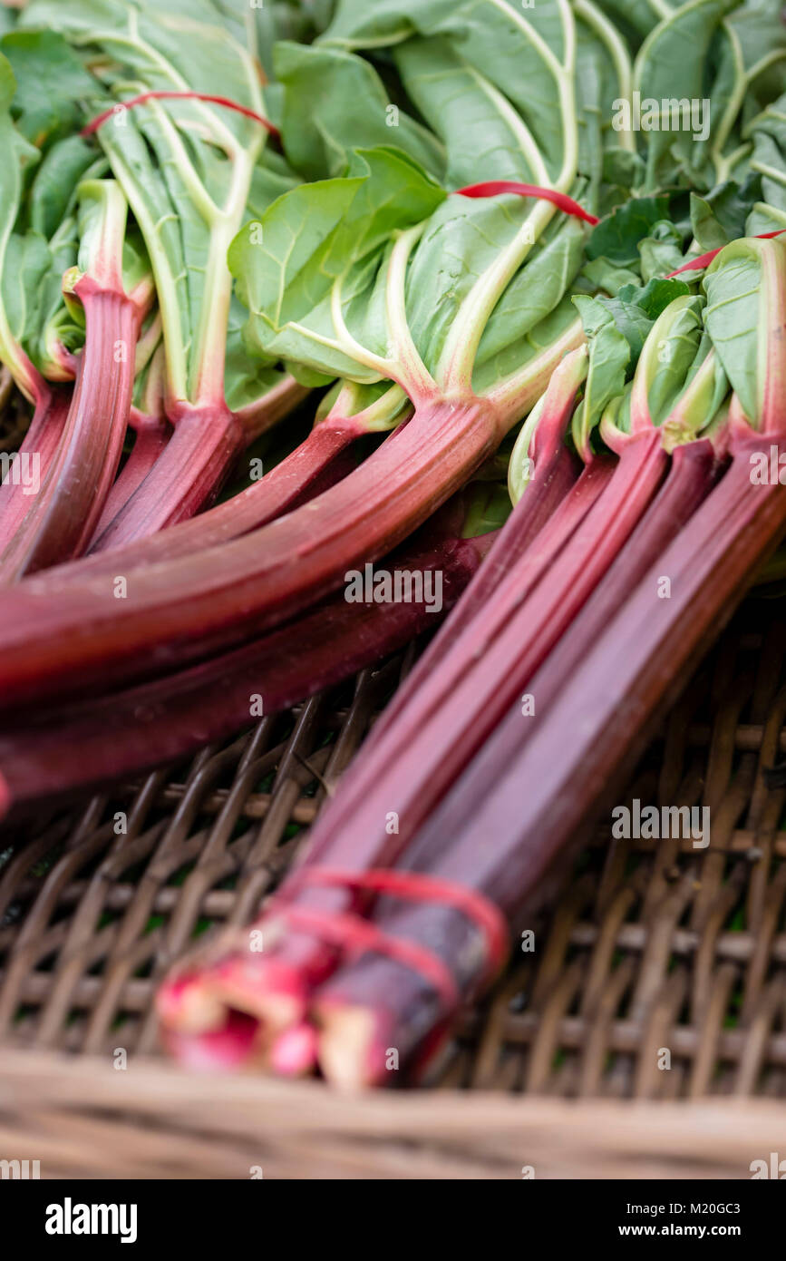 Fresh rhubarb plant in woven basket, closeup. Organic bundles of rhubarb with red stems, green leaves at market - Stock Image