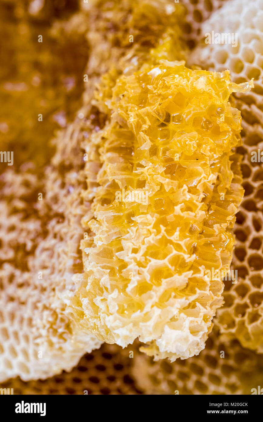 Natural Honeycomb with honey, macro, closeup, full frame. Comb honey, beeswax cells, unprocessed, golden yellow. - Stock Image