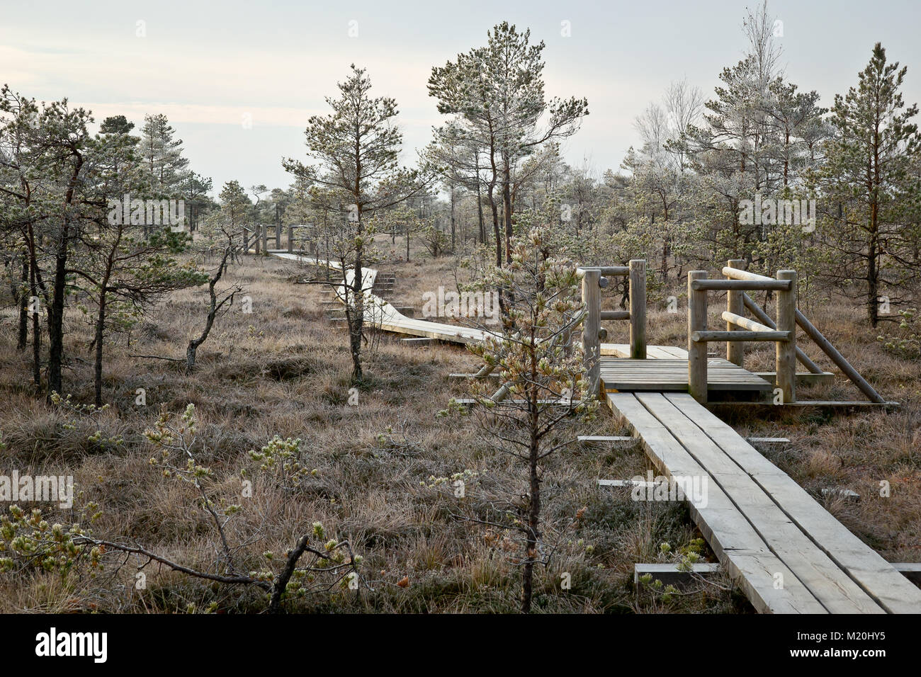 Great Kemeri Bog Boardwalk, Latvia - Stock Image
