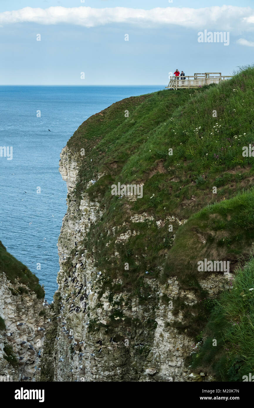Cliff-top view of nesting seabirds for couple of people (birdwatchers) on viewing platform - Bempton Cliffs RSPB Stock Photo