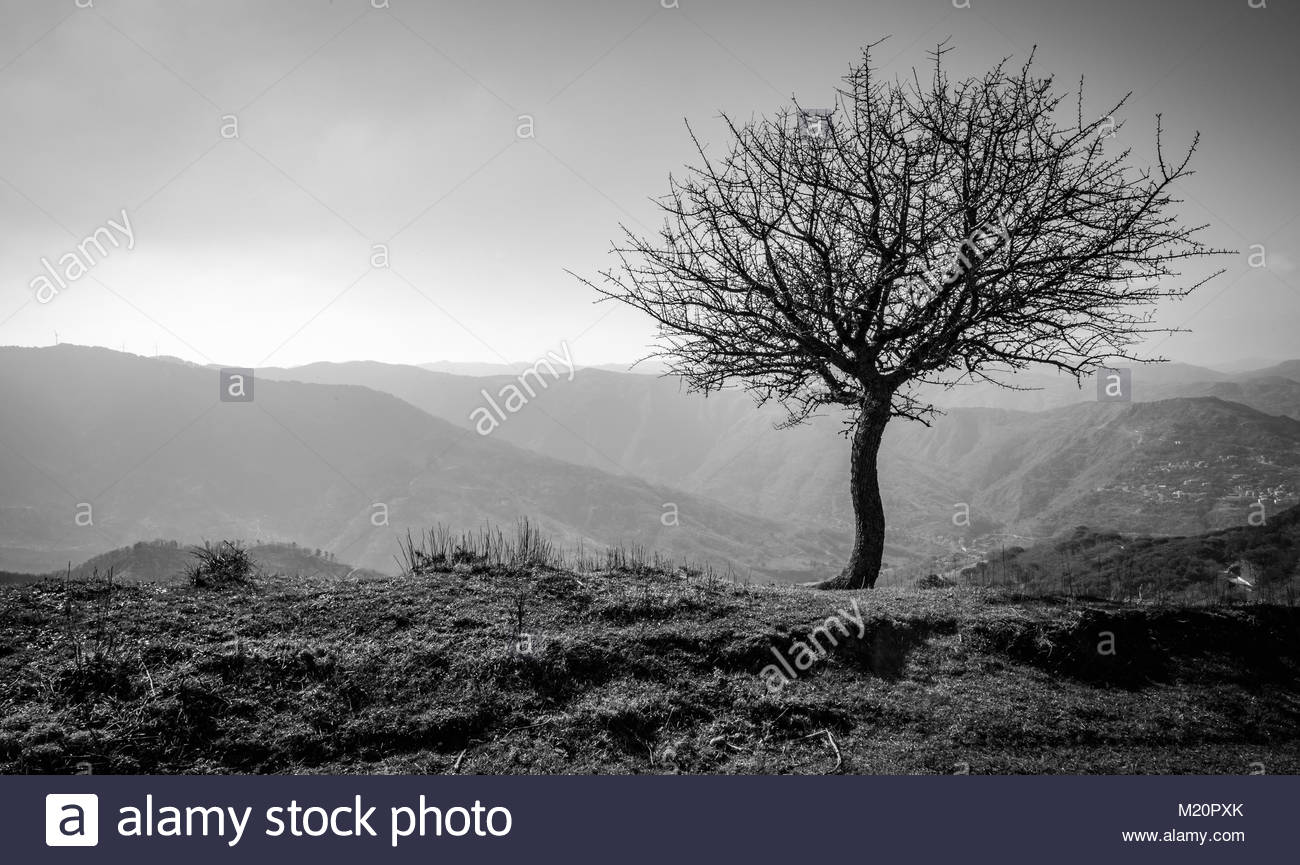 lone tree with mountains - Stock Image