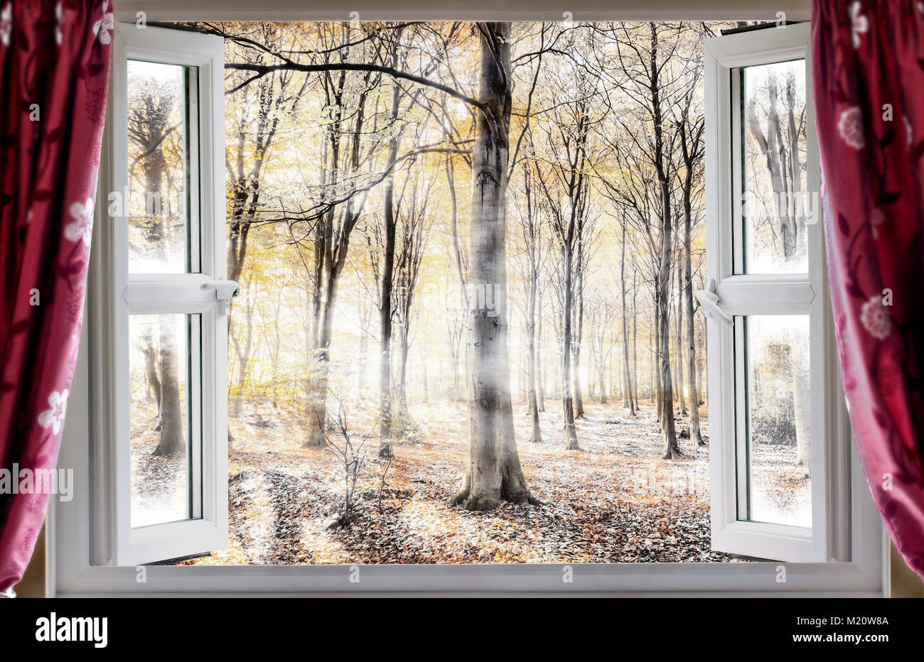 Whispering woodland viewed through an open window with red curtains during a cold autumn morning. Mist and fog slowly - Stock Image