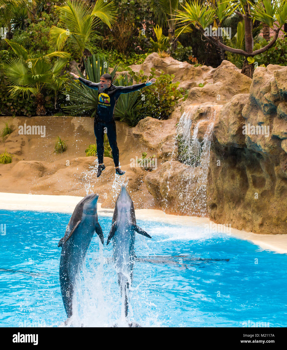 Man being thrown into the air by traiined dolphins. Loro Parque, Tenerife, 2016 - Stock Image
