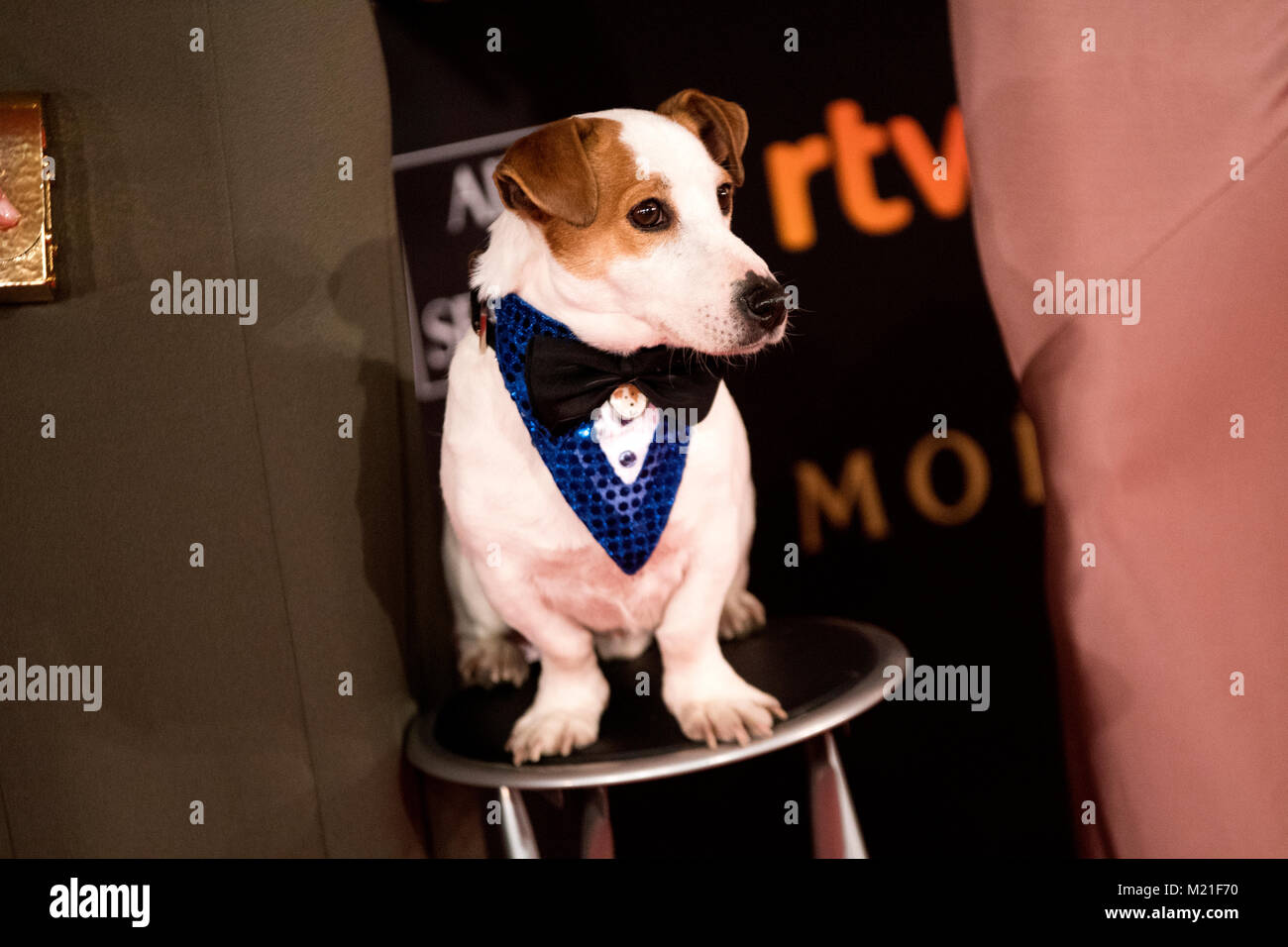 Madrid, Spain. 3rd February, 2018. 'Pancho', a dog which appears in some Spanish films during the red carpet - Stock Image