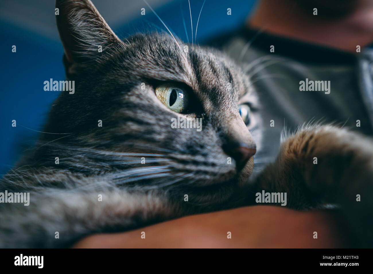 Photo of a grey cat - Stock Image