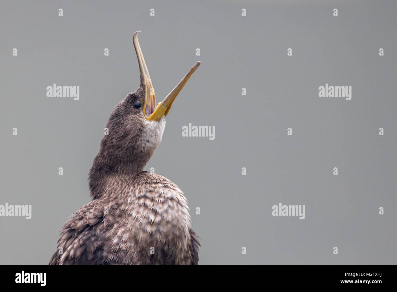 birds at Bharatpur Bird Sanctuary in Rajasthan, India - Stock Image