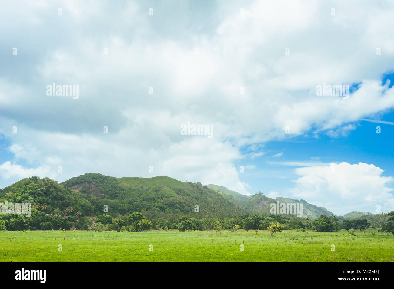 Beautiful vibrant background consisting of trees of the rain forest of Central America. Typical landscape of Dominican - Stock Image