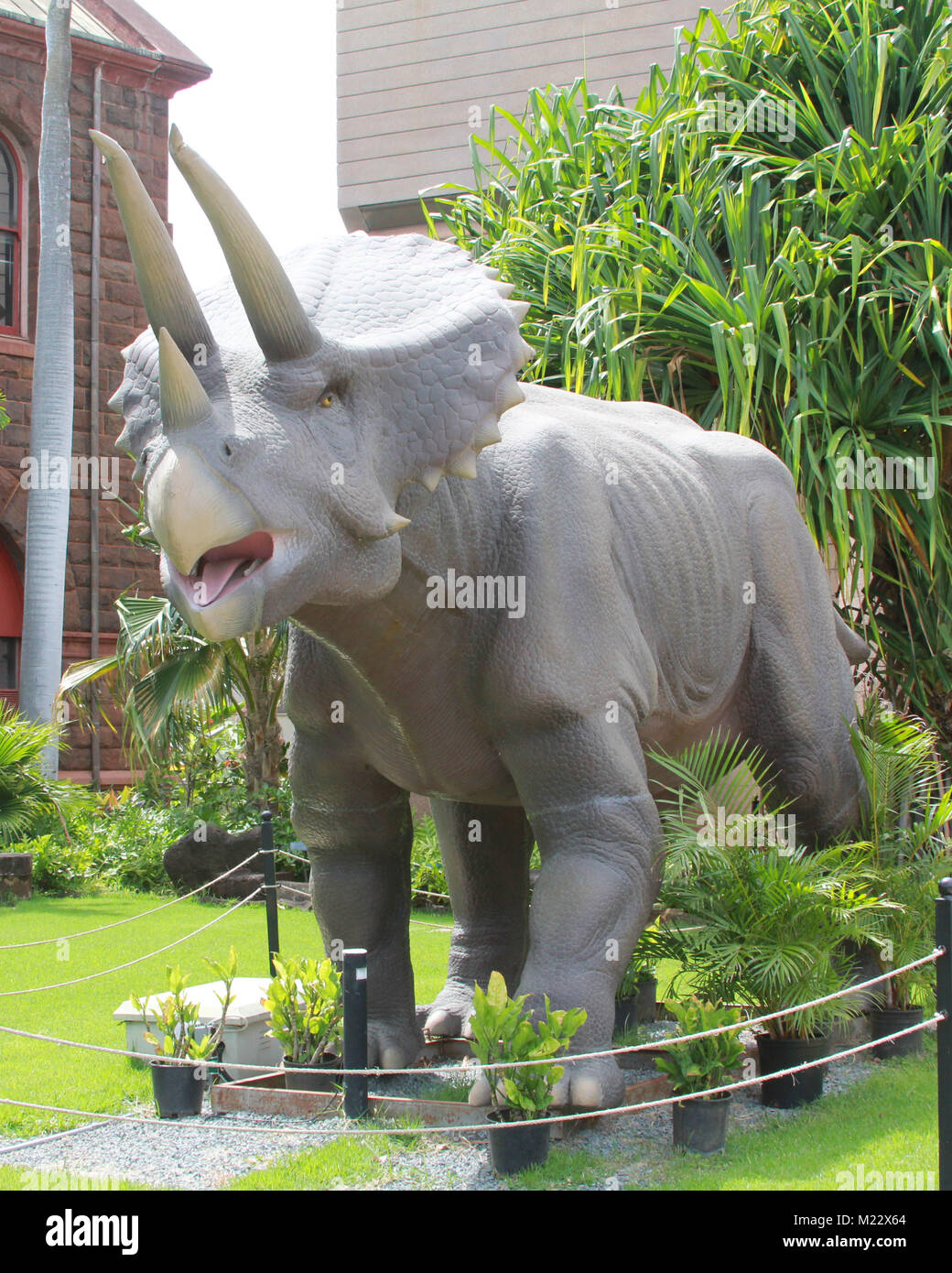 A triceratops statue from the Bernice Pauhai Bishop Museum in Honolulu, Hawaii. - Stock Image