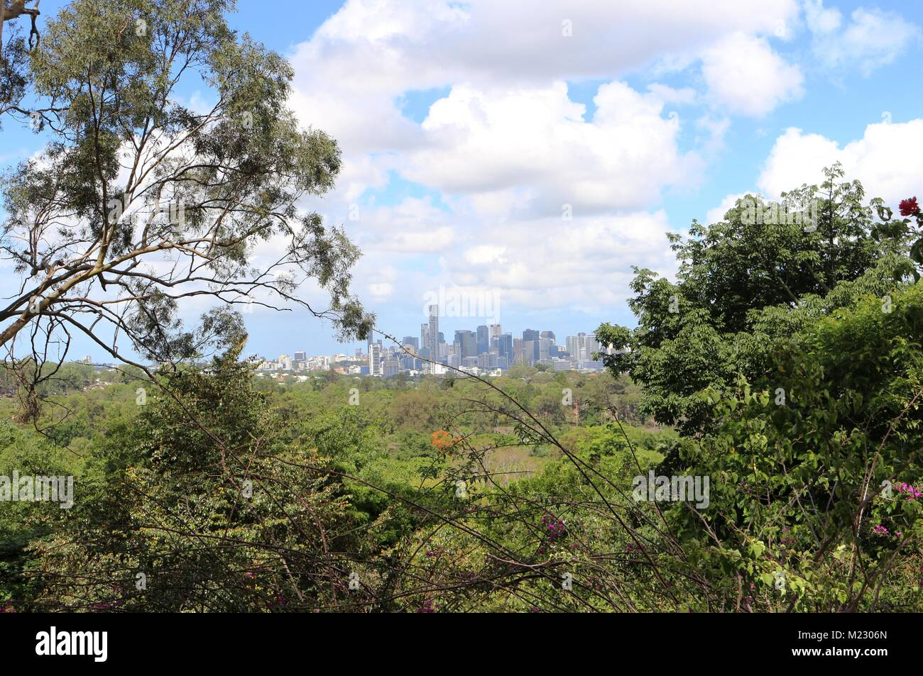 Brisbane City view through the bush - Stock Image