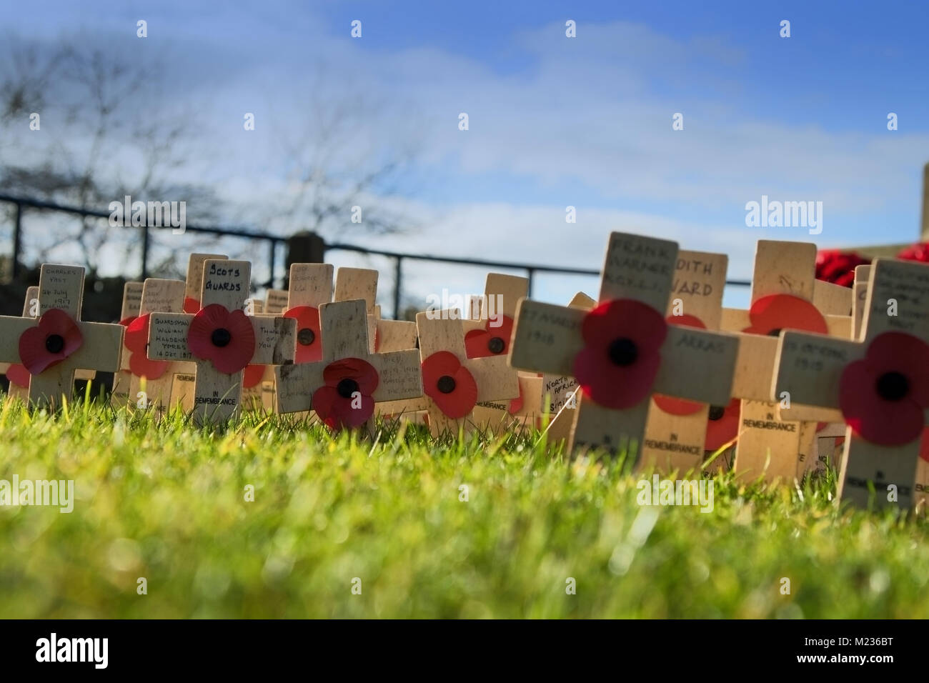 Remembrance day red Poppies pinned to small wooden crosses near the war memorial at Knaresborough Castle,North Yorkshire,England,UK. - Stock Image