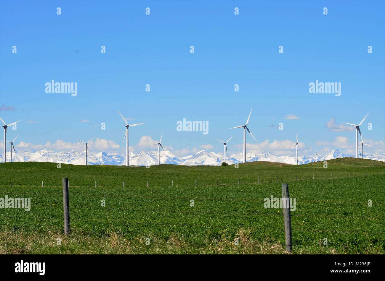 A farm of wind turbines sit in a field of green grass with an amazing view of the snow covered Rocky mountains in - Stock Image