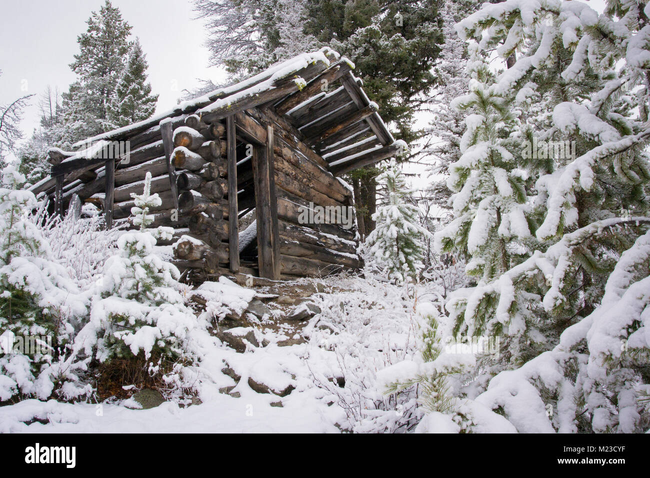 An abandoned cabin at the Coloma mining town, off the Garnet Range Road, northwest of Drummond, Montana in Missloula - Stock Image