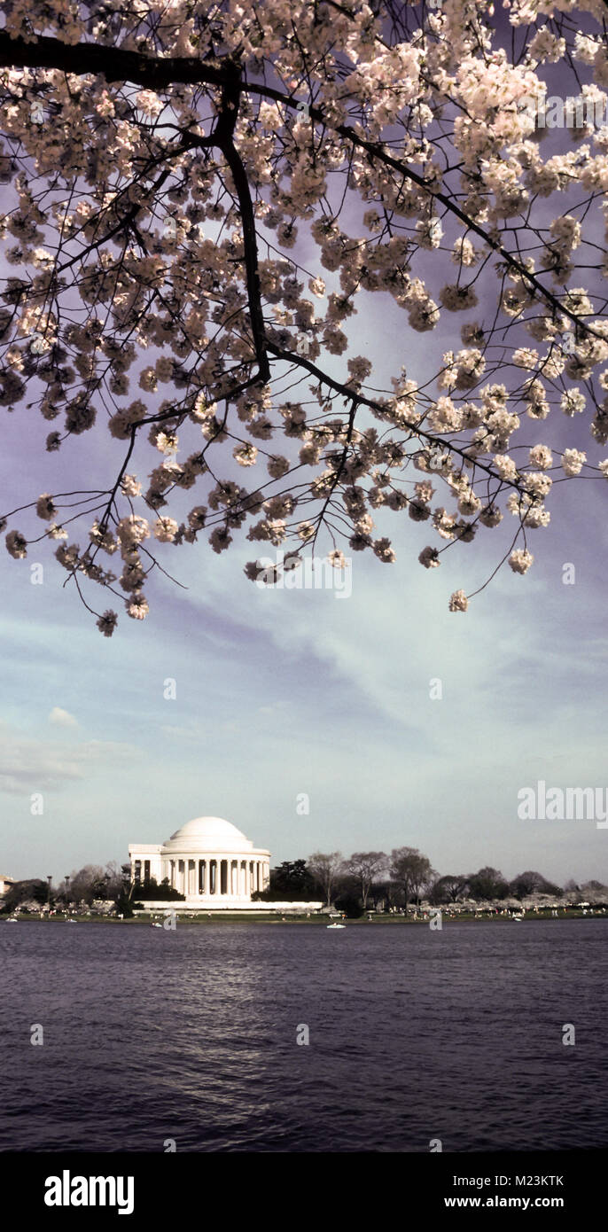 A view of spring on the east coast of the USA in Washington DC at the nations capital Stock Photo