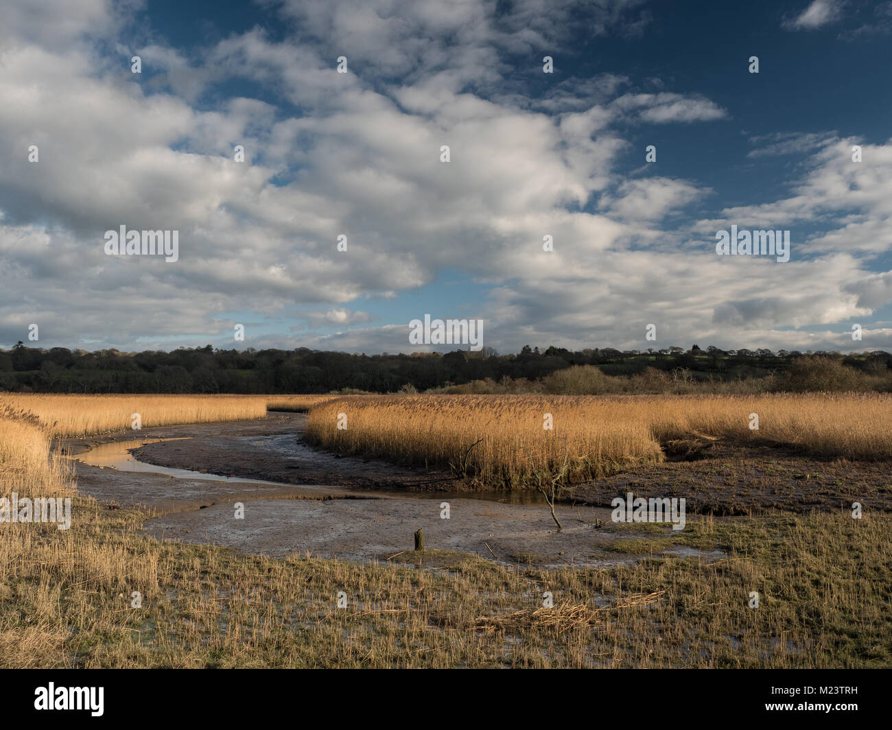 Inlet, Teifi Marshes nature reserve Stock Photo