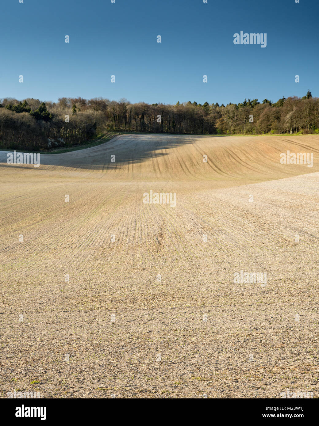 Spring sun shines on Wendover Woods and a ploughed field in the Hale in England's Chiltern Hills. - Stock Image