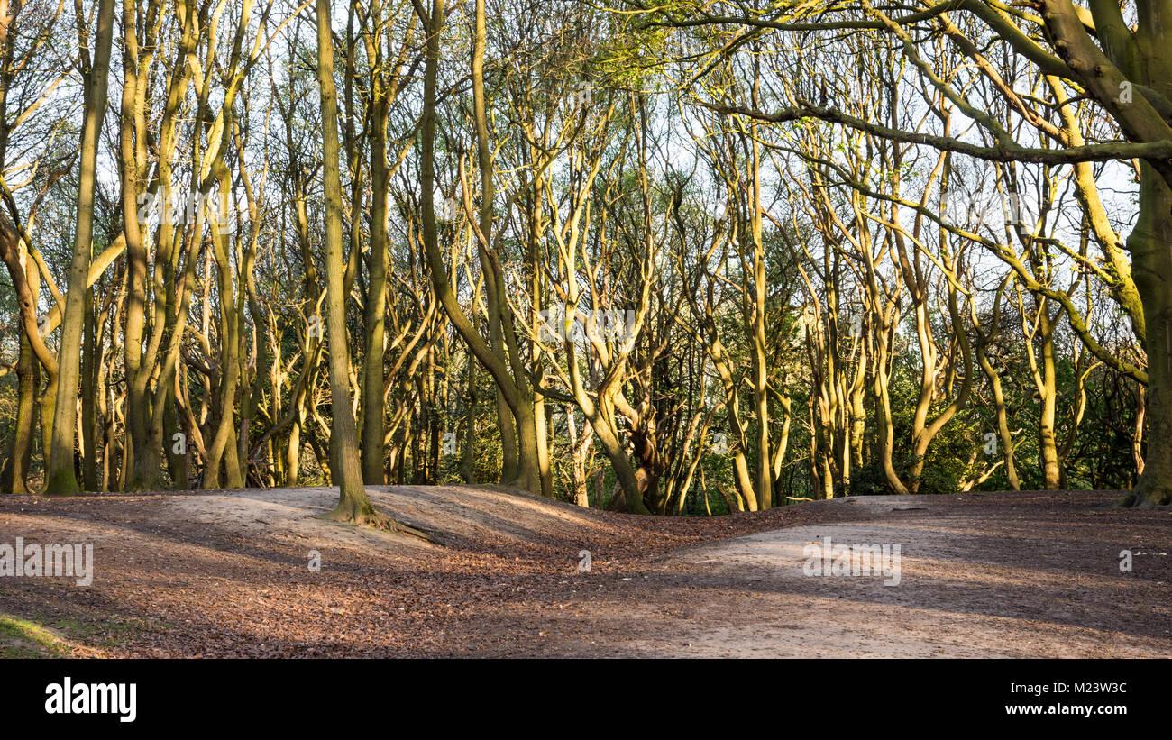 Evening sun shines through bare early springtime trees in London's Hampstead Heath park. - Stock Image