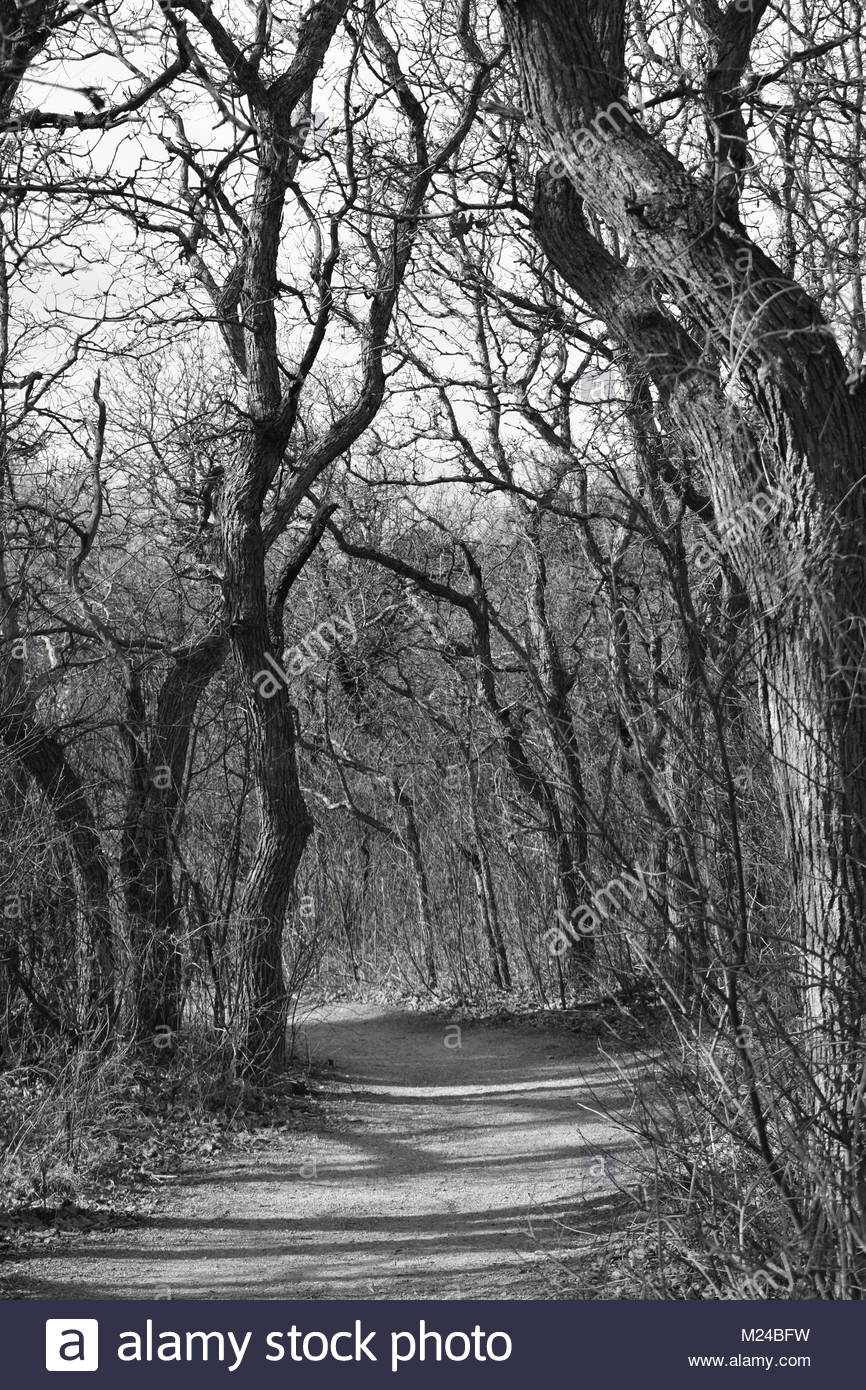 Black and White Tree Lined Path - Stock Image