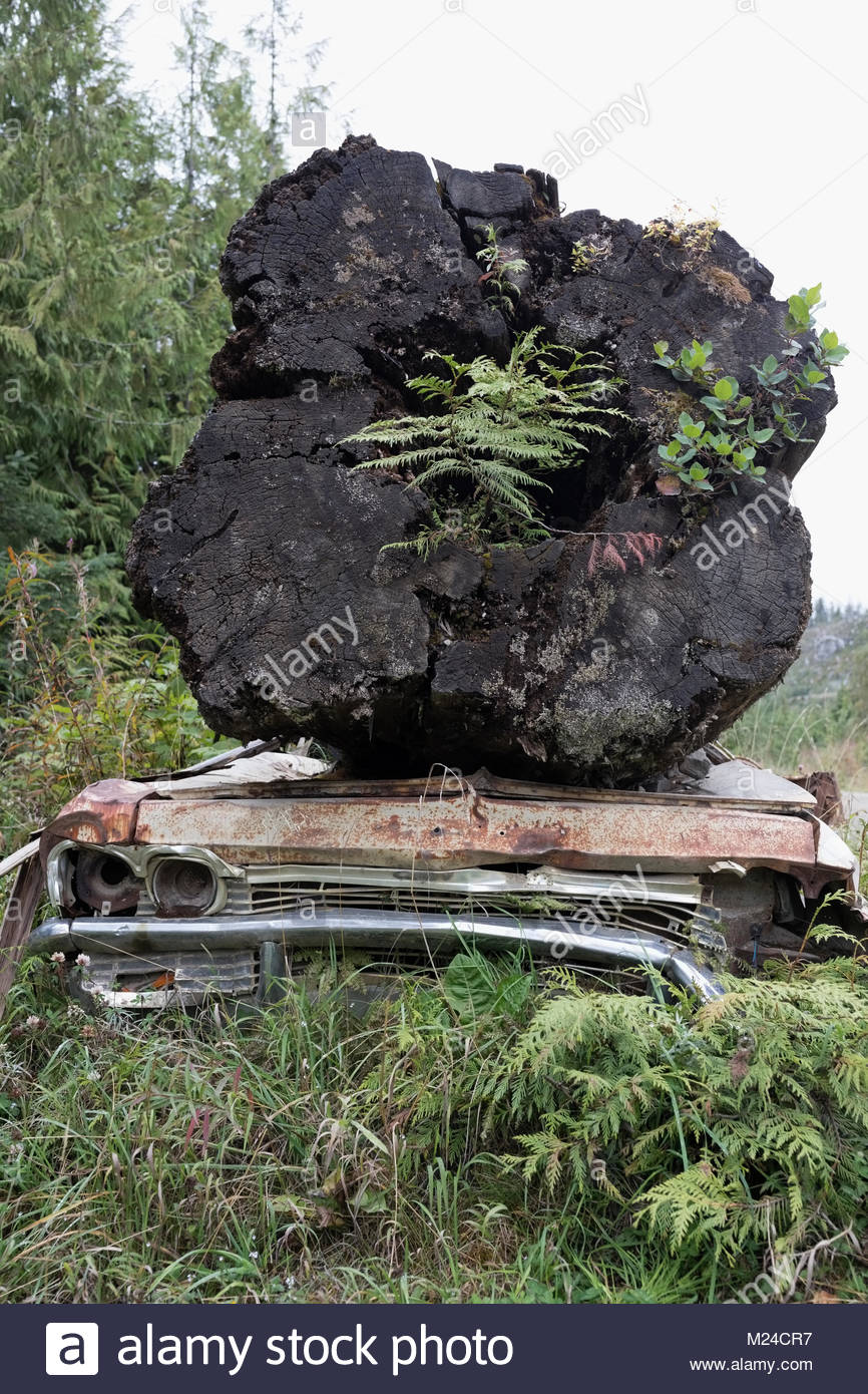 Plants growing in large fallen tree on rusted car Stock Photo