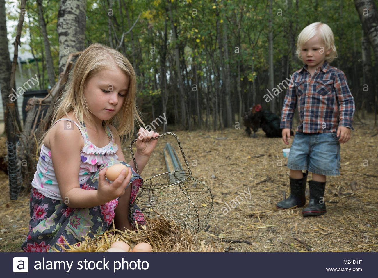 Curious, blonde brother and sister gathering fresh eggs - Stock Image